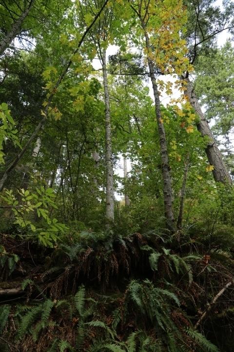 Mount Douglas Park, Saanich