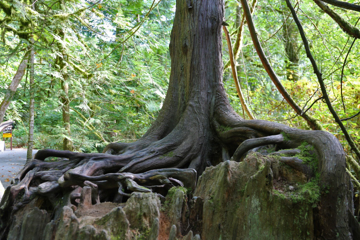 Goldstream Provincial Park: Nursery Log