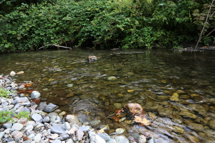 Goldstream Provincial Park: Coldstream River