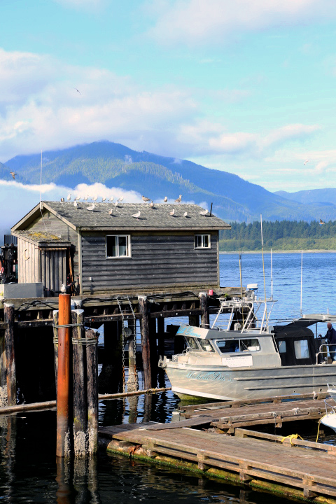 Port Renfrew: Harbour
